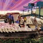 Thị trường - Tiêu dùng - Xuất khẩu gạo: Tính hoài vẫn hẹp cửa ra