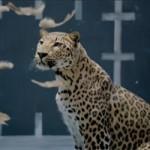 Ô tô - Xe máy - Jaguar quảng cáo chế nhạo gà của Mercedes-Benz