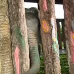 Tin tức trong ngày - Nguyên nhân khiến voi quật chết huấn luyện viên
