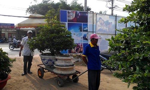 Mai Tết Sài Gòn: Hàng giá rẻ được ưu ái - 3