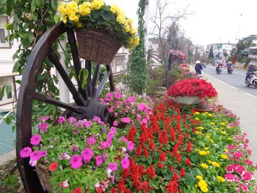 Chùm ảnh: Đà Lạt rực rỡ sắc hoa - 8