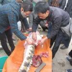 """Thị trường - Tiêu dùng - Cá sấu mổ ngay tại chợ Thủ đô """"cháy"""" hàng"""