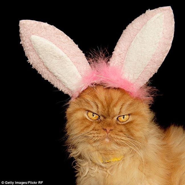 Chủ nhân của chú mèo là Hulya Ozkok, đã đặt tên cho con vật cưng của mình cái tên Garfi.