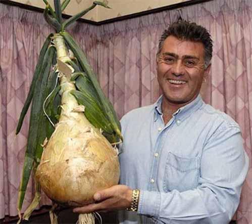 Tỏi tây khổng lồ gần 10 kg vì được nghe nhạc - 2