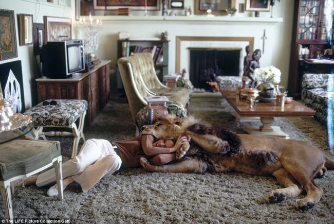 Chú sư tử Niel đã trở thành một thành viên thực thụ của gia đình nữ diễn viên gạo cội Tippi Hedren từ năm 1970.