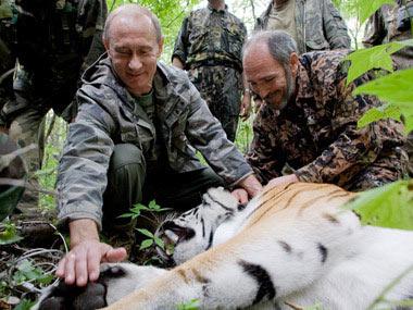 """Hổ của Putin """"đào tẩu"""" sang Trung Quốc - 1"""