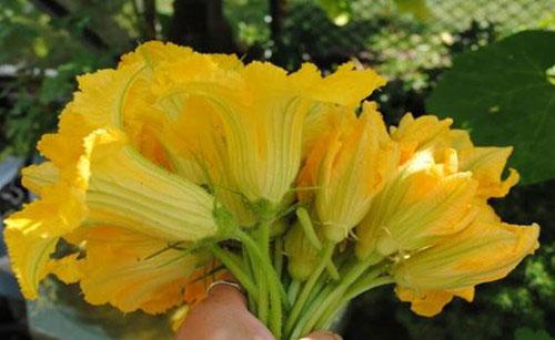 Thực phẩm từ hoa giúp chữa bệnh - 2