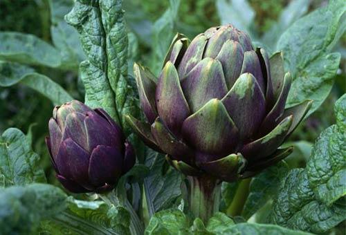 Thực phẩm từ hoa giúp chữa bệnh - 3