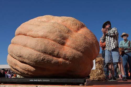Những quả bí ngô khổng lồ nhất thế giới - 2