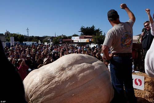 Những quả bí ngô khổng lồ nhất thế giới - 3