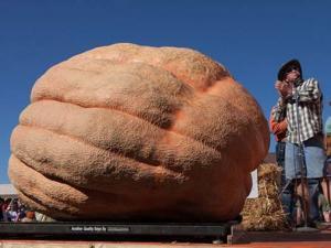 Những quả bí ngô khổng lồ nhất thế giới
