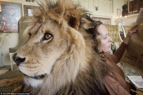 Siêu sao hối hận vì để con gái ngủ với sư tử - 10