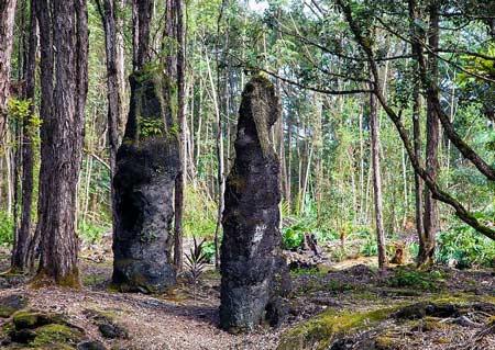 Khám phá rừng cây nham thạch độc đáo ở Hawaii - 3