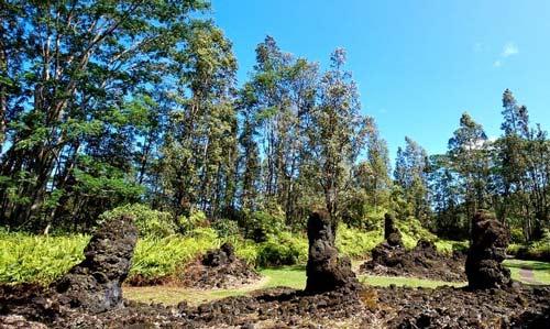 Khám phá rừng cây nham thạch độc đáo ở Hawaii - 5