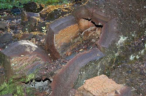Khám phá rừng cây nham thạch độc đáo ở Hawaii - 6