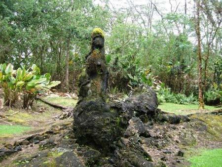 Khám phá rừng cây nham thạch độc đáo ở Hawaii - 8