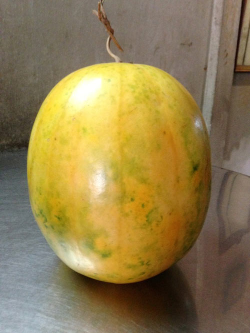 Những trái cây miền Tây để cả năm không hỏng - 3