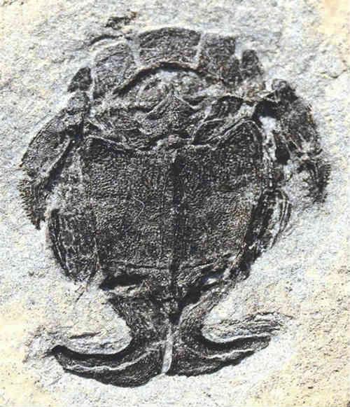 Phát hiện bộ phận sinh dục giống đực gần 4 tỉ năm trước - 1