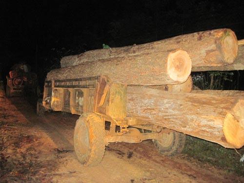 Bắt 4 xe vận chuyển gỗ lậu trong đêm - 1