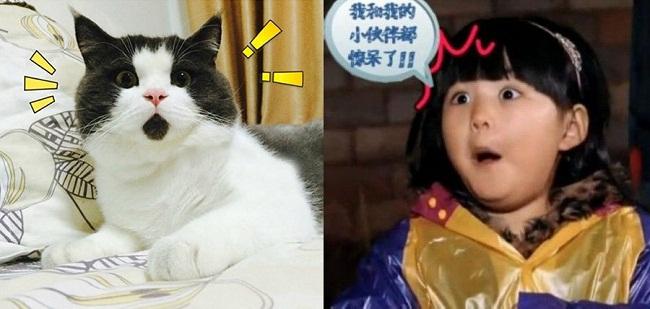 Một chú mèo lông ngắn đang thu hút được rất nhiều sự chú ý với biểu hiện khuôn mặt của mình. Trong ảnh là biểu cảm được so sánh với con gái của MC Trung Quốc Lý Tương - Vương Thi Linh. Cô bé từng tham gia show thực tế Bố ơi mình đi đâu?