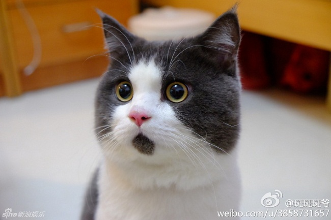 & nbsp;Cư dân mạng gọi chú là chú mèo  OMG .