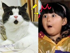 """Chú mèo """"OMG"""" gây sốt vì biểu cảm ngạc nhiên"""
