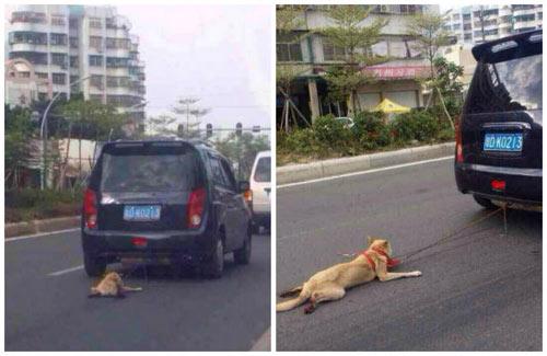 TQ: Bị săn lùng vì dùng xe kéo lê chó tới gần chết - 2