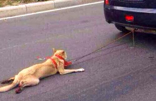 TQ: Bị săn lùng vì dùng xe kéo lê chó tới gần chết - 1