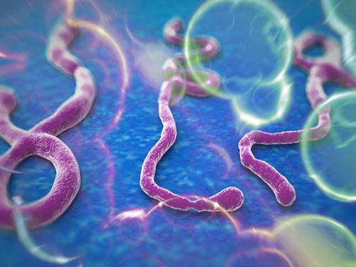 Vì sao nữ y tá gốc Việt thoát tử thần Ebola? - 2