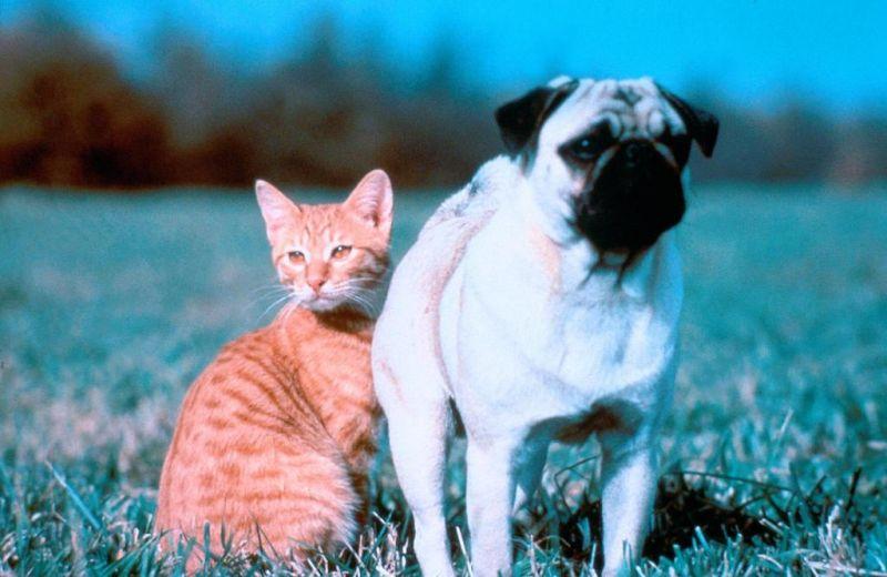 11 bộ phim bị chỉ trích vì ngược đãi động vật - 3