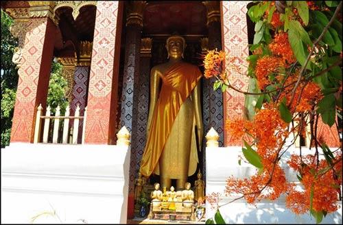 Luang Prabang, mùa hoa vô ưu nở - 4