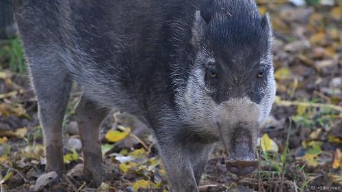 Những loài động vật xấu xí cần được bảo vệ - 2