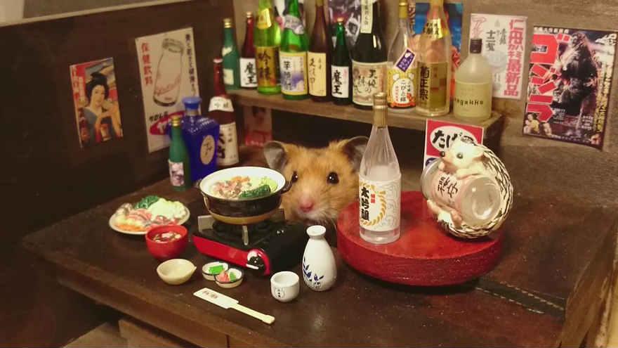 Chú chuột Hamster làm bồi bàn quán bar siêu đáng yêu - 7