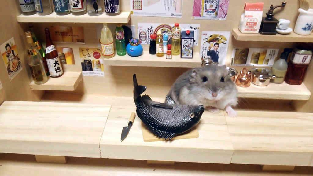 Chú chuột Hamster làm bồi bàn quán bar siêu đáng yêu - 4
