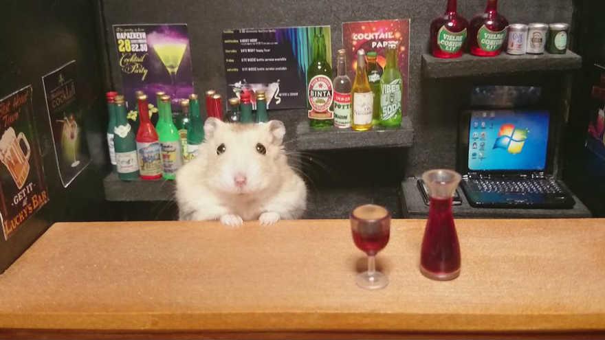 Chú chuột Hamster làm bồi bàn quán bar siêu đáng yêu - 2