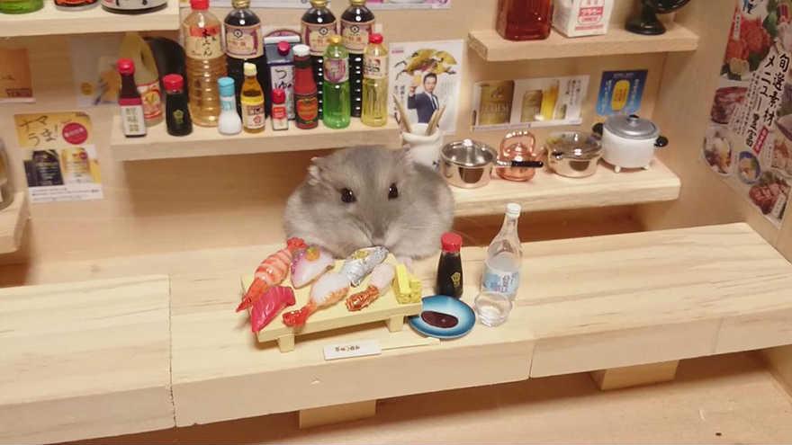Chú chuột Hamster làm bồi bàn quán bar siêu đáng yêu - 5