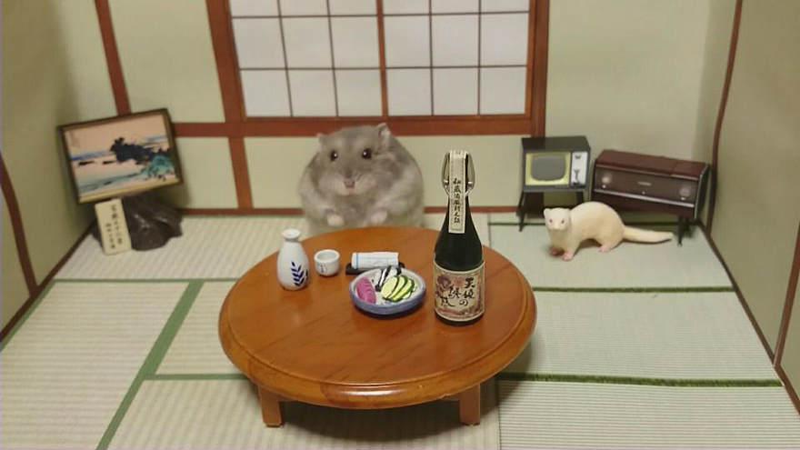 Chú chuột Hamster làm bồi bàn quán bar siêu đáng yêu - 8