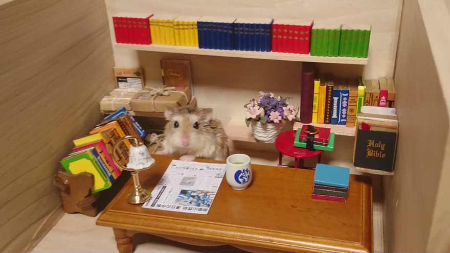 Chú chuột Hamster làm bồi bàn quán bar siêu đáng yêu - 6