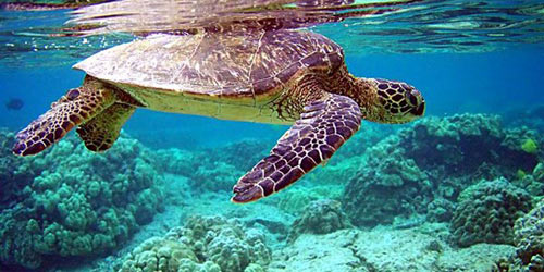 Côn Đảo: Mùa rùa con rộn ràng về với biển - 1