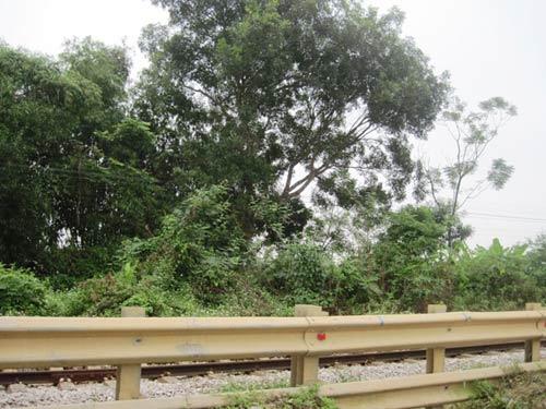 Người đàn ông treo cổ trên cây xoài cạnh quốc lộ 1A - 1