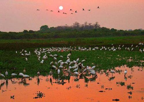 Chiêm ngưỡng vẻ đẹp đầm lầy nước ngọt lớn nhất TG - 4