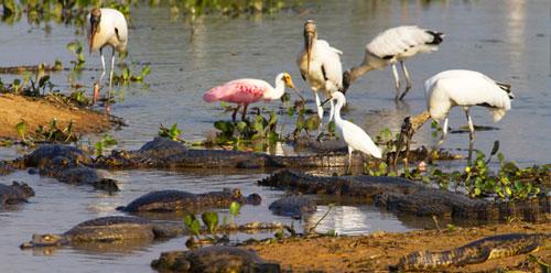 Chiêm ngưỡng vẻ đẹp đầm lầy nước ngọt lớn nhất TG - 5