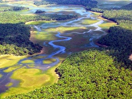 Chiêm ngưỡng vẻ đẹp đầm lầy nước ngọt lớn nhất TG - 6