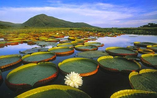 Chiêm ngưỡng vẻ đẹp đầm lầy nước ngọt lớn nhất TG - 8