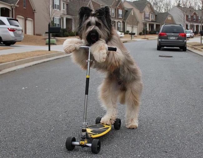 1 - Chú chó Norman cùng xe trượt