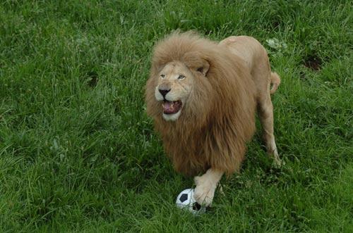Tuyển tập tranh vui bóng đá 2014 (4) - 4