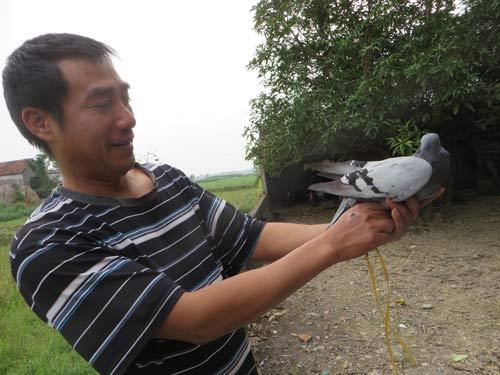 Bắt được chim bồ câu mang kí tự lạ ở Nghệ An - 1