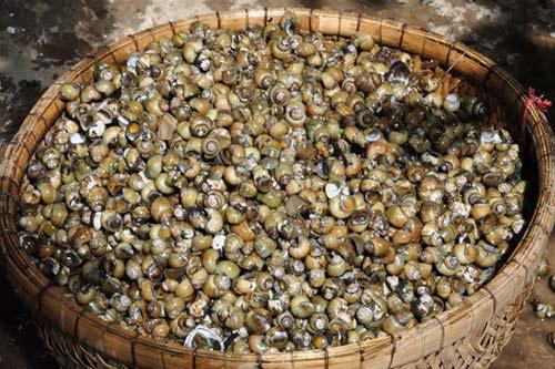 Ngon lạ lùng ốc gạo Phú Đa - 2