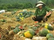 Nông sản qua Lạng Sơn đã hết ùn ứ