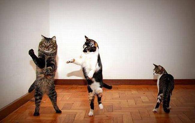 Nhìn đây, phải nhảy như thế này này